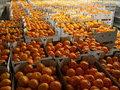На пути из Петербурга в Москву исчез грузовик с 18 тоннами мандаринов