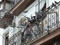 Как отвадить голубей от балкона?