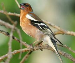 Спортивным орнитологам разрешат ловить птиц